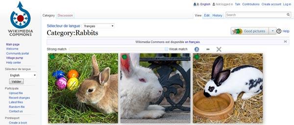 Wikimedia une des plus grosses banque d'images gratuites